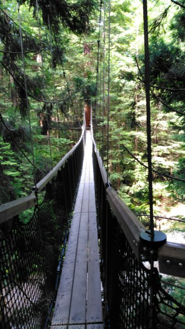 Long bridge across forest large redwood trees and ferns between