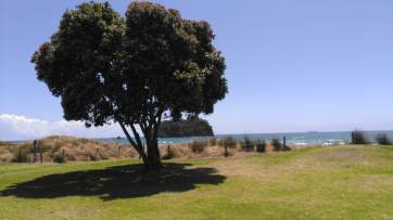 Pohutukawa tree with sea and small island in background