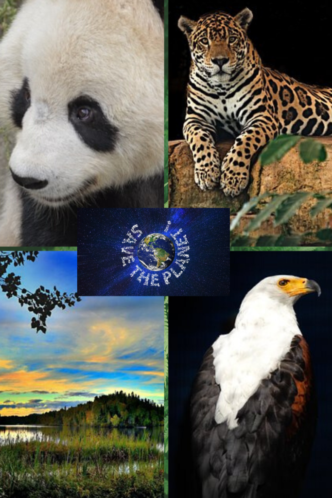 Four grid image. top left image of panda. top right image of jaguar sitting on rock looking out. bottom left image of green hill and grassy lake and blue sky. bottom right image of eagle. middle dark blue logo box with earth image in middle and white capital letters circling 'Save the Planet'