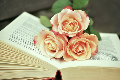image of open book on table with three pale pink roses across middle of pages.