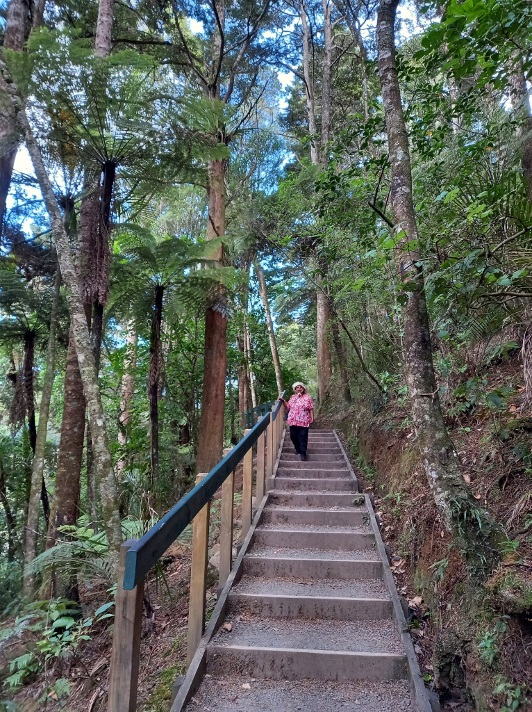 long and tall trees hug a narrow set of stairs with railing in middle of image. woman in red top and black pants standing towards top of stairs.